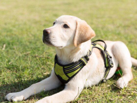 Akcesoria treningowe dla psów - w co warto zainwestować? 3