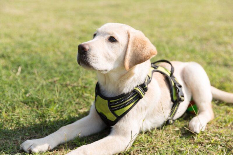 Akcesoria treningowe dla psów - w co warto zainwestować? 1