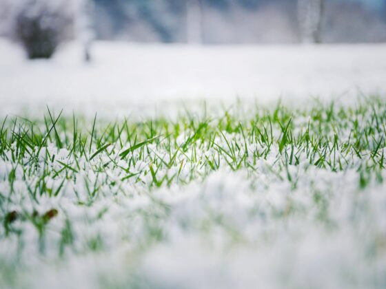 Jak przygotować trawnik do zimy? 5