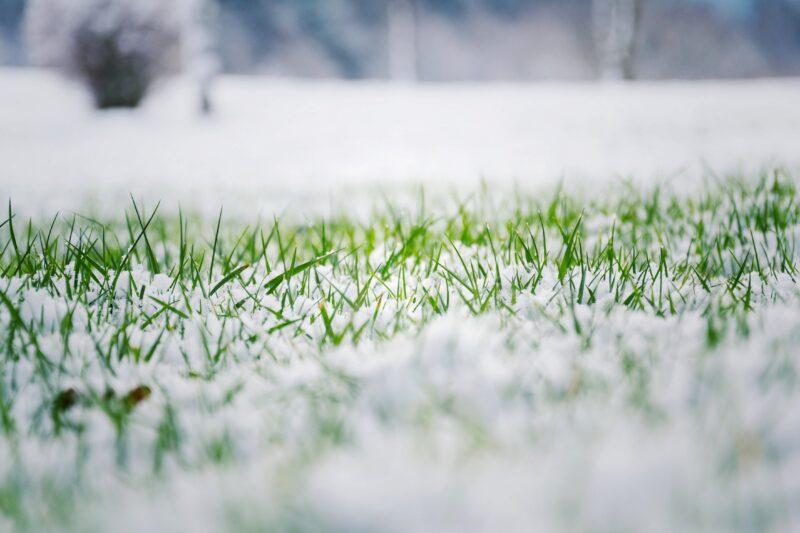 Jak przygotować trawnik do zimy? 1