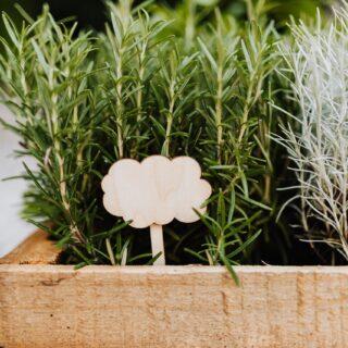 Kocanka włoska – jak o nią poprawnie zadbać? 8