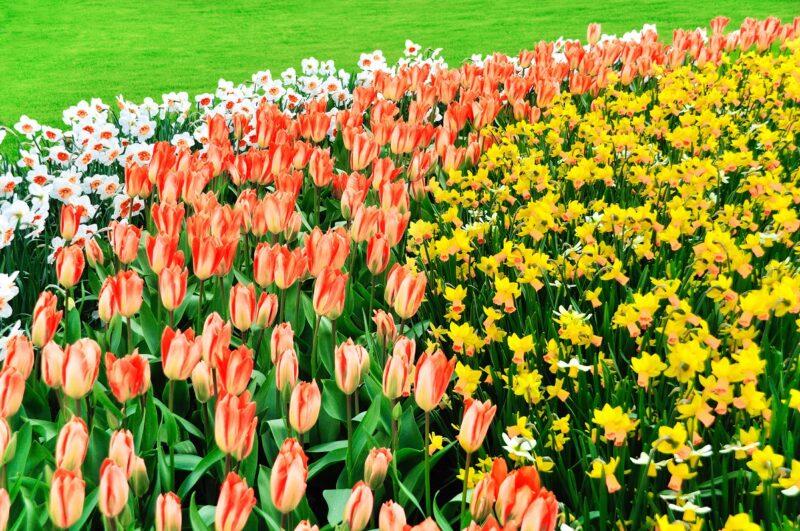 Co warto wiedzieć na temat sadzenia kwiatów cebulowych? 1