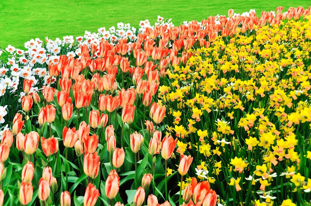 Co warto wiedzieć na temat sadzenia kwiatów cebulowych? 15