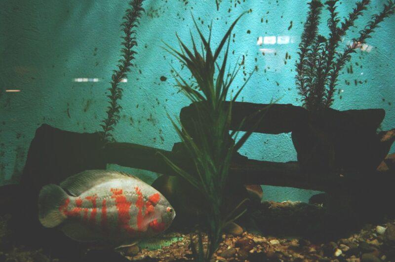 Udekoruj swoje akwarium – jak stworzyć scenę zbiornika? 1