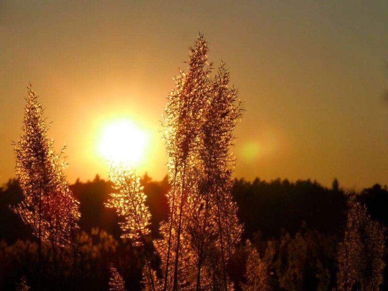 Światło naturalne 1
